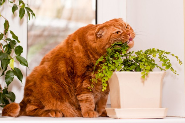 biljke koje ubijaju mace petface