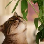 OPREZNO: Biljke koje ubijaju mace!