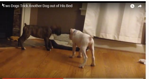 isterala trećeg psa iz kreveta petface
