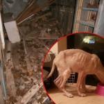 NOVI BEOGRAD: Dve Beograđanke spasile šest pasa, vezanih lancima, okruženih izmetom!
