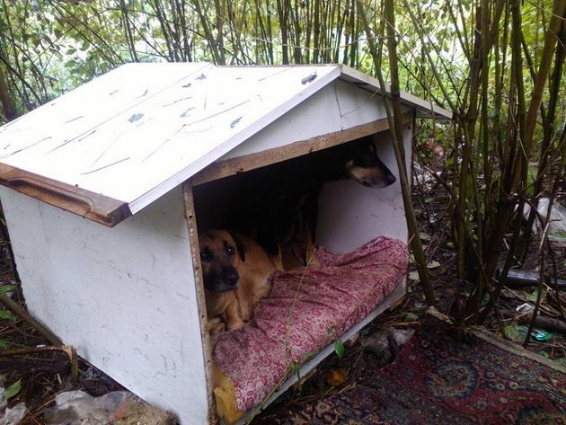 kućica za napuštene životinje petface
