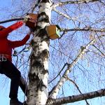KRALJEVO: Učenici napravili i postavili kućice za vrapce! (VIDEO)