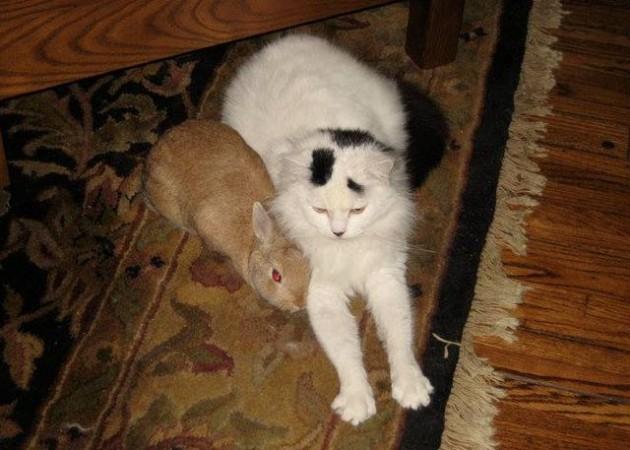 mačka je spasila dve bebe veverice petface