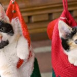 Nekoliko saveta kako da i vama i vašoj mački praznici prođu u sreći!