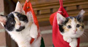 mačke i praznici petface