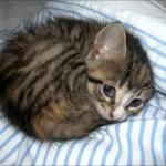 Macama je mesto u toplim domovima, ne napolju!