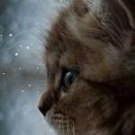 """KORISNO: Kako da maca """"ubije"""" zimsku dosadu?"""