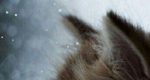 """maca """"ubije"""" zimsku dosadu petface"""