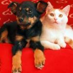 Biramo psa i macu sa najvećim srcem! Pomozite nam!
