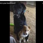 SAVRŠEN ODGOVOR: Ko je ovom psu najbolji prijatelj?! (VIDEO)