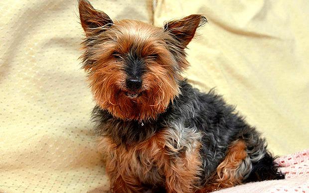 najstariji pas petface