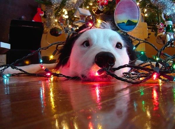 novogodišnja jelka i vaš ljubimac petface