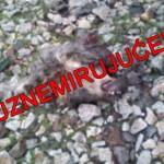 NASILJE NAD ŽIVOTINJAMA NE JENJAVA: N.S. u Batajnici pronašao odsečenu glavu psa!