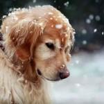ZIMA JE NA PRAGU: Da li Vaš pas ima toplu kućicu?