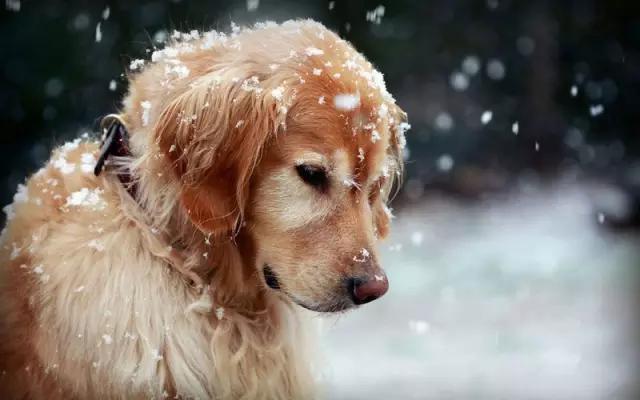 pas ima toplu kućicu petface