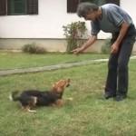 PAMETNICA IZ OBRENOVCA: Meda je pas koji zna da sabira, množi i deli! (VIDEO)