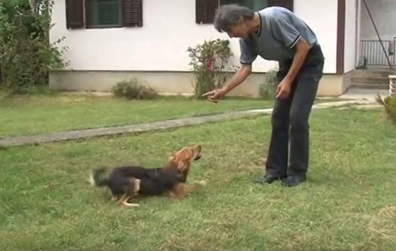 pas koji zna da sabira petface