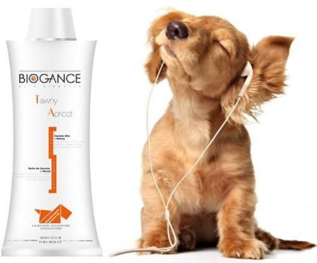 pas odbija da se kupa biogance petface