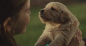pas prijatelj petface