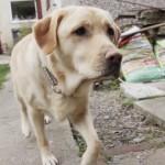 PRAVI HEROJ: Pas spasao porodicu od požara, a potom i dobio i nacionalnu nagradu za hrabrost