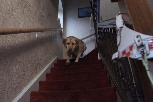pas spasao porodicu od pozara petface