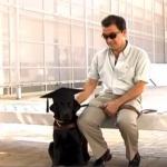 SJAAAJNE VESTI: Pas vodič za slepe dobio diplomu fakulteta