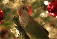 pokloni za ptice petface