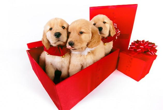 psi i mačke nisu poklon petface