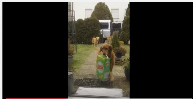 psi pomazu vlasnici petface