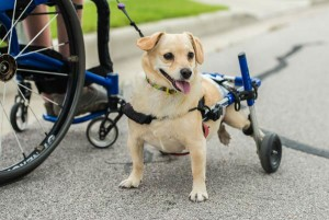 invalidska kolica petface