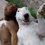 selfi petface