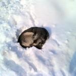 MOŽEMO ZAJEDNO: Šta kada u snegu pronađemo sklupčanu napuštenu životinju?