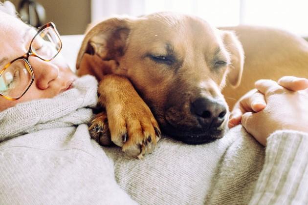 spavanje sa ljubimcem petface