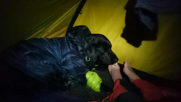 sa svojim psom prešao već preko 1500 km