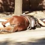 EMOCIJE: Policajac ne želi da se odvoji od svog konja, koji je poginuo!