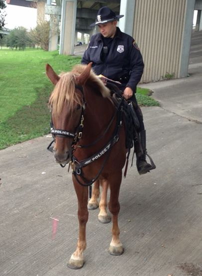 svog konja petface