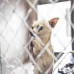 Fotografija Olivera – čivave koja moli – obišla svet i spasila ga pred eutanaziju!
