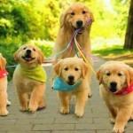 SAVETI: Koliko dugo je preporučljivo da šetate svoje štene?!