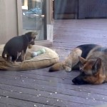 VIDEO: Šta kada štene BAŠ ne želi da spava?