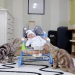 VIDEO: 5 mačaka upoznaje bebu, a izraz njihovih lica govori – ŠTA SI TI?!
