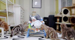 5 mačaka upoznaje bebu petface