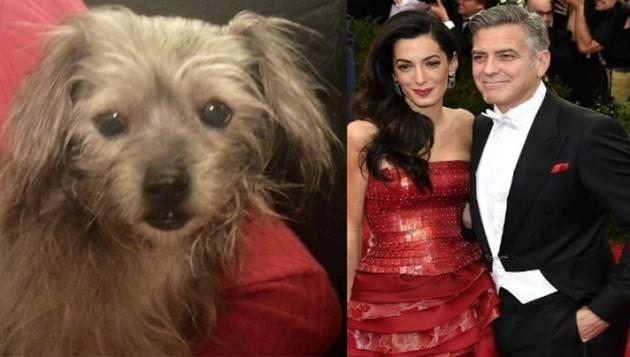 Džorž Kluni spasio je psa petface