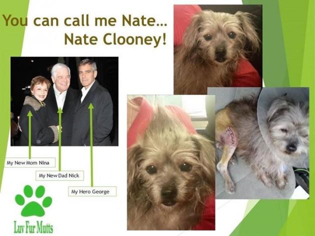 Džorž Klunu spasio je psa petface