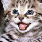 LJUBIMAC INTERNET ZAJEDNICE: Počinje Izbor za ONLINE PETFACU!