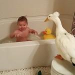 Jednogodišnji dečak ima najboljeg druga i zaštitnika – patka!