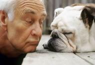 Starost psa petface