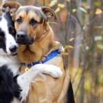 Loti i Grizli su psi koji su na svakoj slici ZAGRLJENI!