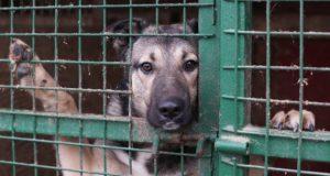 Zlostavljanje životinja petface