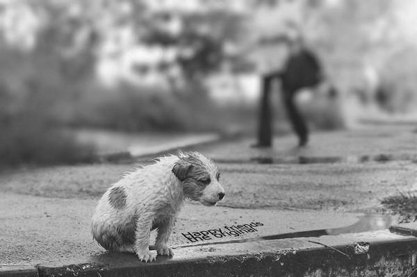 Zlostavljanje životinja u Beogradu petface