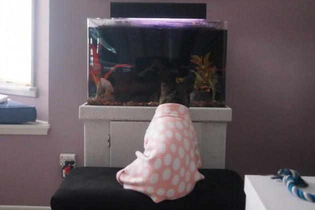akvarijum petface